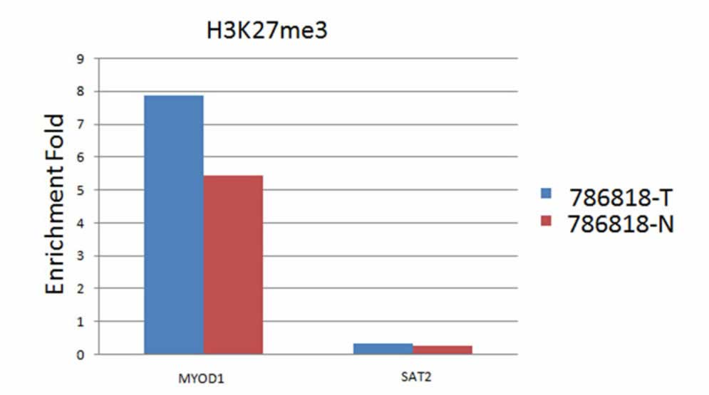 ABclonal: review for TriMethyl-Histone H3-K27 Rabbit pAb(A2363)