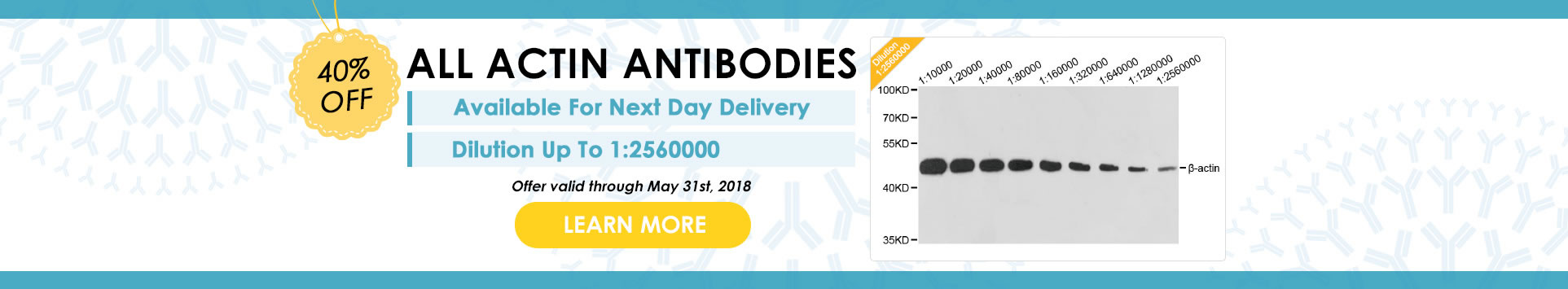 40% Off on All Actin Antibodies, Dilution Up To 1:2560000, Learn More