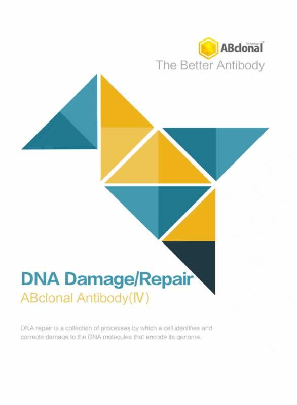 DNA Damage/Repair