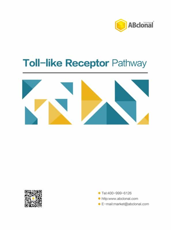 Toll-like Receptor Pathway