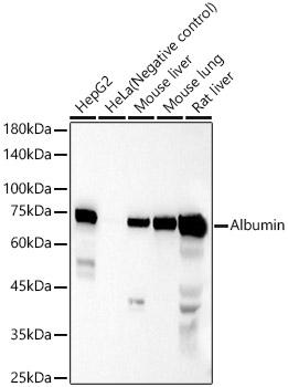 ABclonal:Western blot - Albumin Rabbit pAb (A0353) }