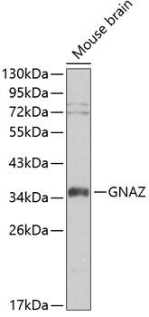 ABclonal:Western blot - GNAZ Rabbit pAb (A0605) }