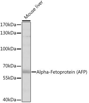 ABclonal:Western blot - Alpha-Fetoprotein (AFP) Rabbit pAb (A11013) }