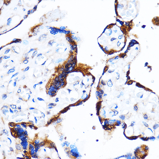 ABclonal:Western blot - [KO Validated] p38 MAPK Rabbit pAb (A14401) }