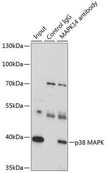 ABclonal:Immunofluorescence - [KO Validated] p38 MAPK Rabbit pAb (A14401) }