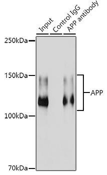 ABclonal:Immunoprecipitation - [KO Validated] APP Rabbit mAb (A17911) }