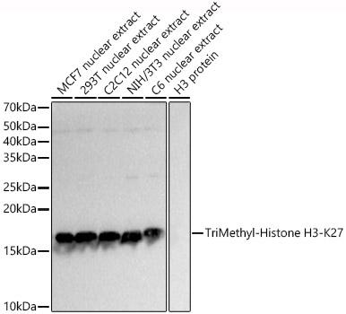ABclonal:Western blot - TriMethyl-Histone H3-K27 Rabbit pAb (A2363)