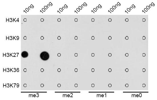 ABclonal: - TriMethyl-Histone H3-K27 Rabbit pAb (A2363)