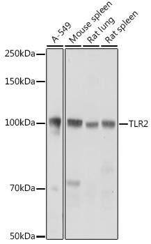 TLR2 Polyclonal Antibody
