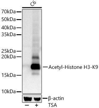 Acetyl-Histone H3-K9 Rabbit pAb