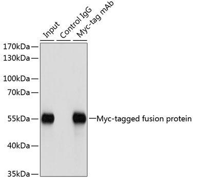 Immunoprecipitation - Mouse Control IgG (CABC011)