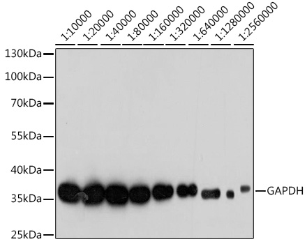 ABclonal:Immunohistochemistry - GAPDH Mouse mAb (AC033)