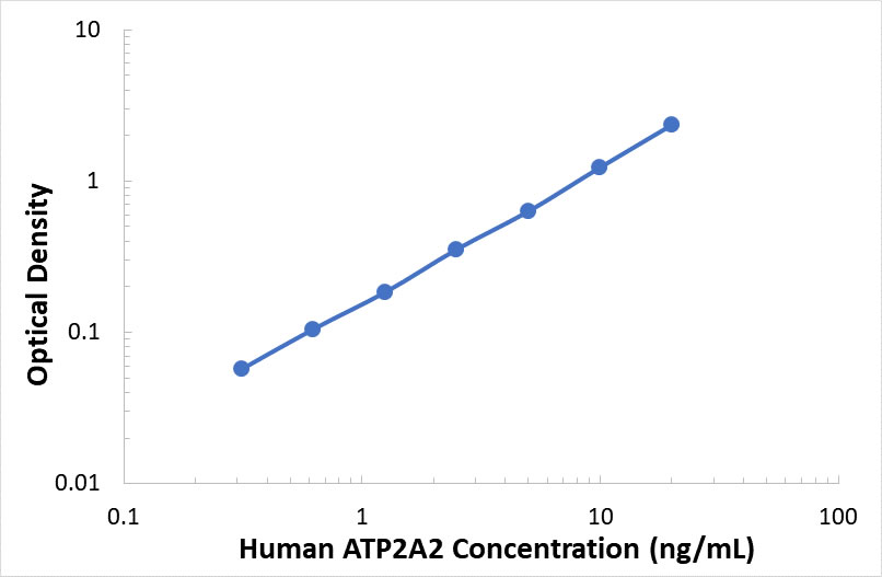 ABclonal:Human ATPase,  Ca++ Transporting,  Cardiac Muscle,  Slow Twitch 2 ELISA Kit (ATP2A2)