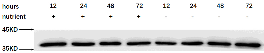 ABclonal: review for GAPDH Polyclonal Antibody(AC001)